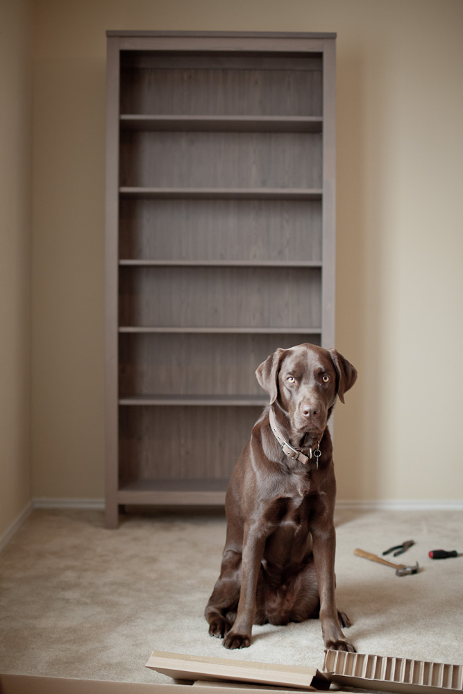 thebookshelf-9112